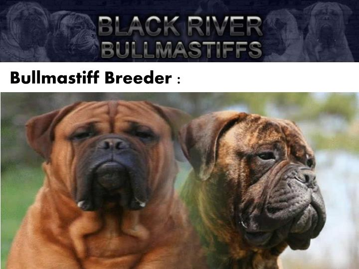 Bullmastiff Breeder :