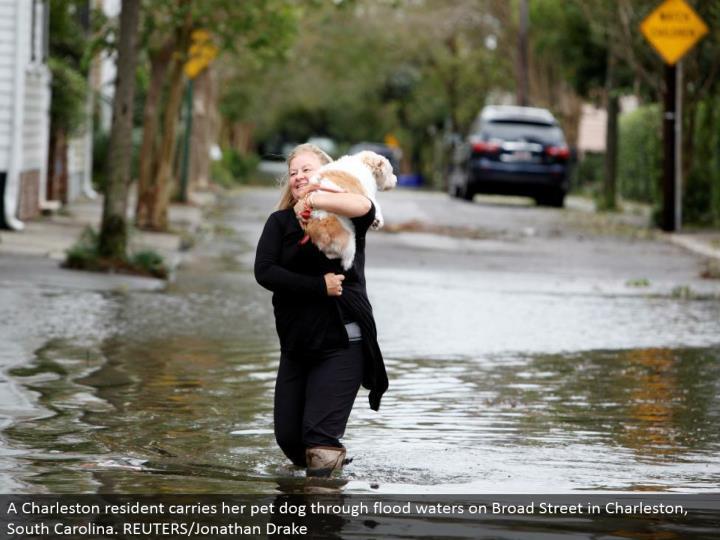 A Charleston inhabitant brings her pet puppy through surge waters on Broad Street in Charleston, South Carolina. REUTERS/Jonathan Drake