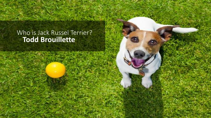 Who is jack russel terrier