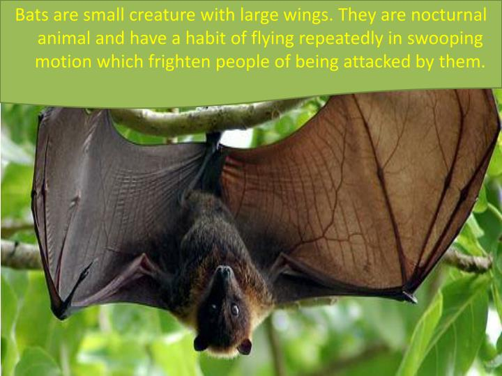 Bats are small creature with large wings. They are nocturnal animal and have a habit of flying repea...