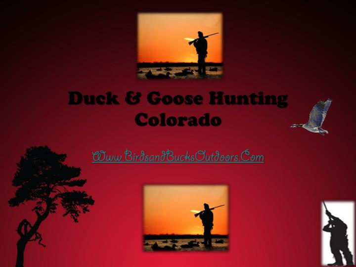 Duck goose hunting colorado