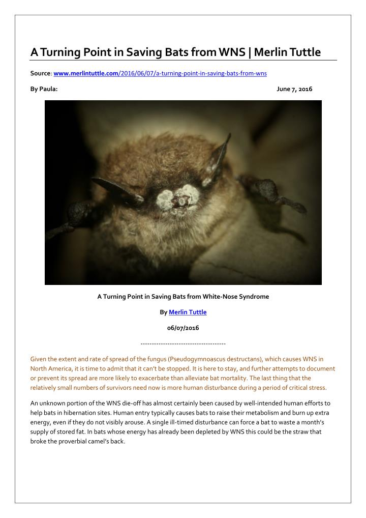 A Turning Point in Saving Bats from WNS | Merlin Tuttle