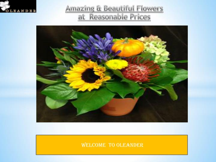 Amazing & Beautiful Flowers at  Reasonable Prices