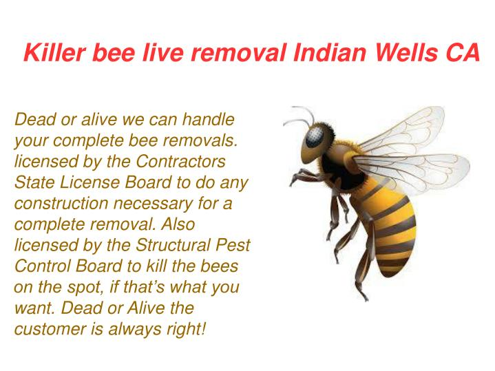 Killer bee live removal Indian Wells CA