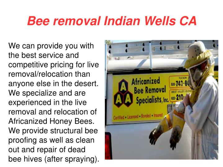 Bee removal Indian Wells CA