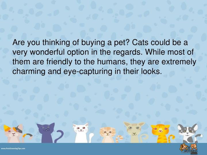 Are you thinking of buying a pet? Cats could be a very wonderful option in the regards. While most o...
