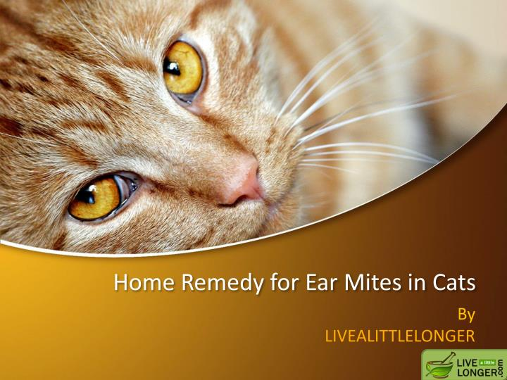 Home remedy for ear mites in cats