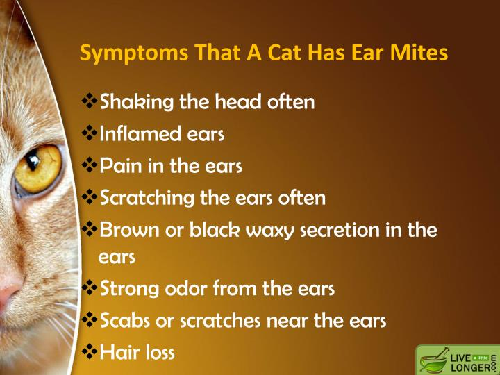 Symptoms that a cat has ear mites