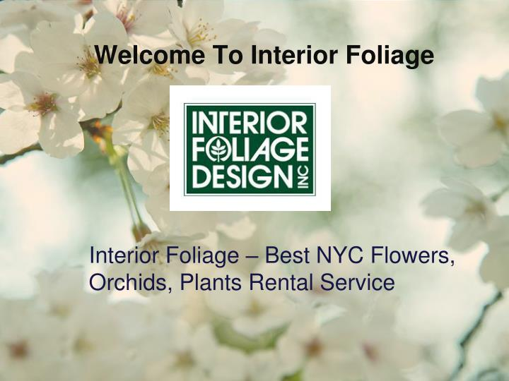 Welcome To Interior Foliage