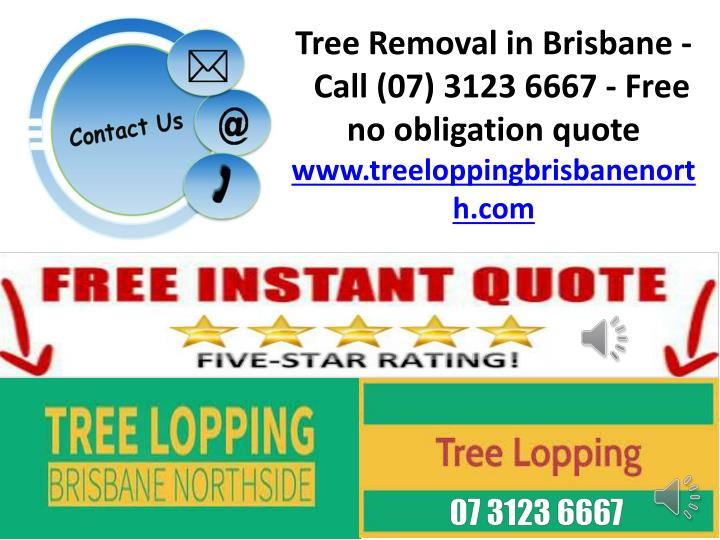 Tree Removal in Brisbane -  Call (07) 3123 6667 - Free no obligation quote