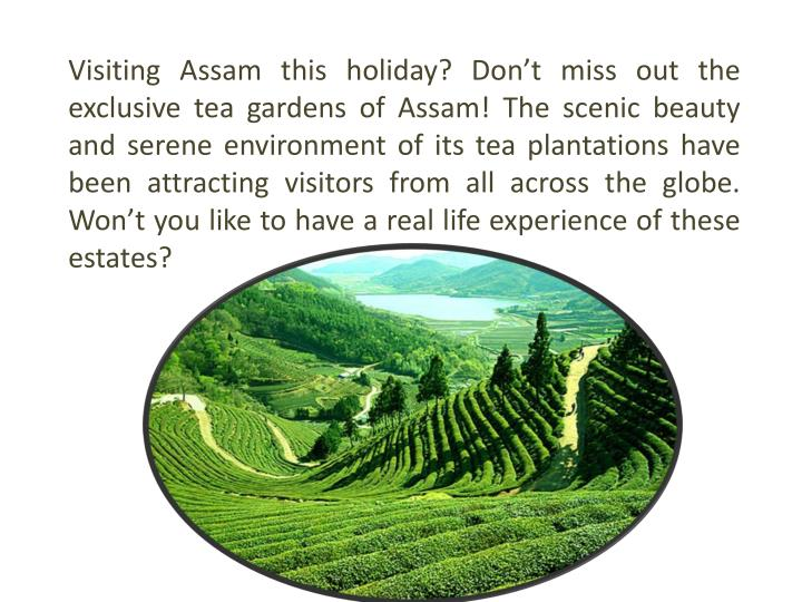 Visiting Assam this holiday? Don't miss out the exclusive tea gardens of Assam! The scenic beauty ...