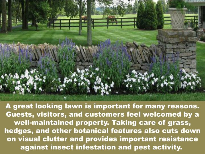 A great looking lawn is important for many reasons. Guests, visitors, and customers feel welcomed by...