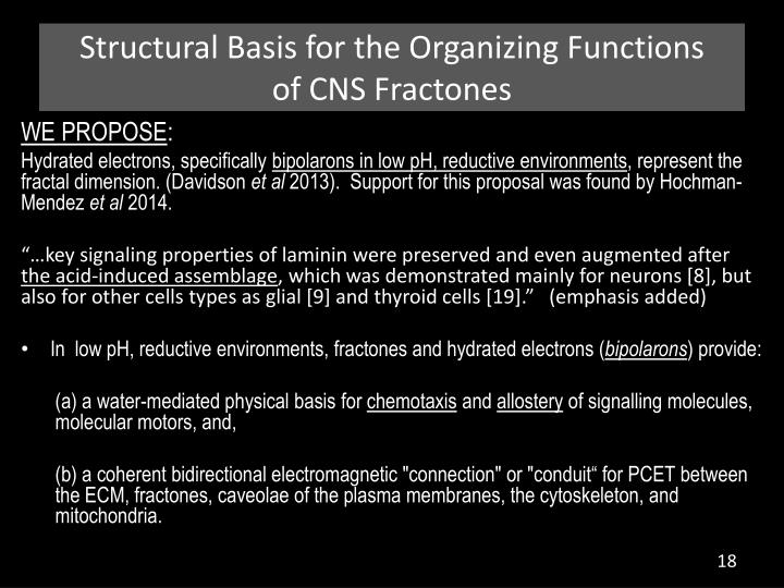 Structural Basis for the Organizing Functions