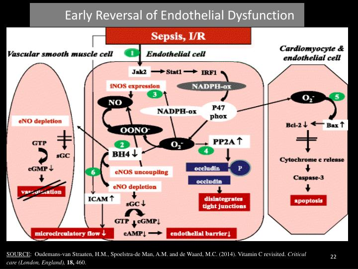 Early Reversal of Endothelial Dysfunction