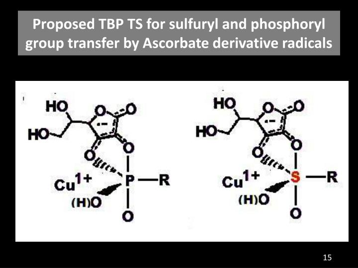 Proposed TBP TS for sulfuryl and phosphoryl