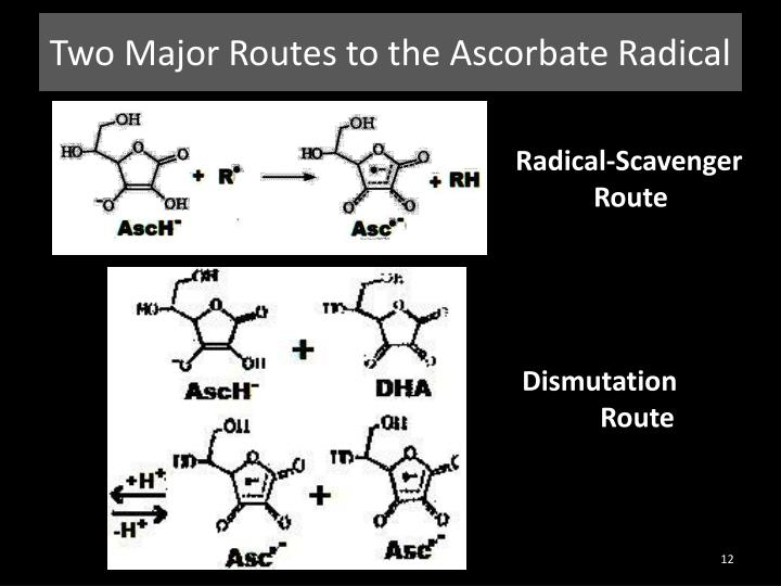 Two Major Routes to the Ascorbate Radical