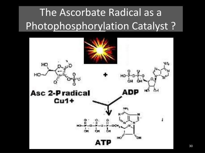 The Ascorbate Radical as a