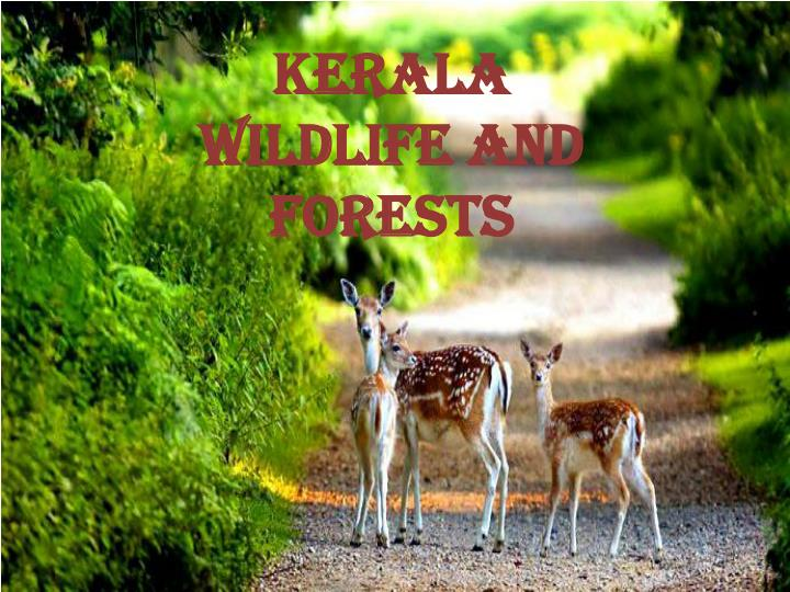 KERALA WILDLIFE AND FORESTS