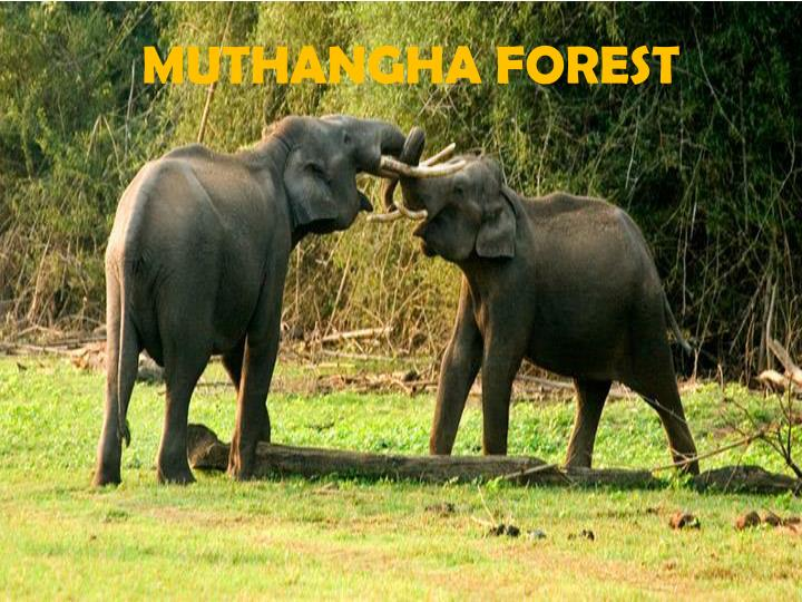 MUTHANGHA FOREST