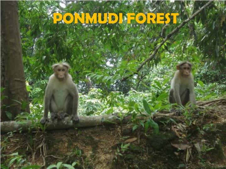 PONMUDI FOREST