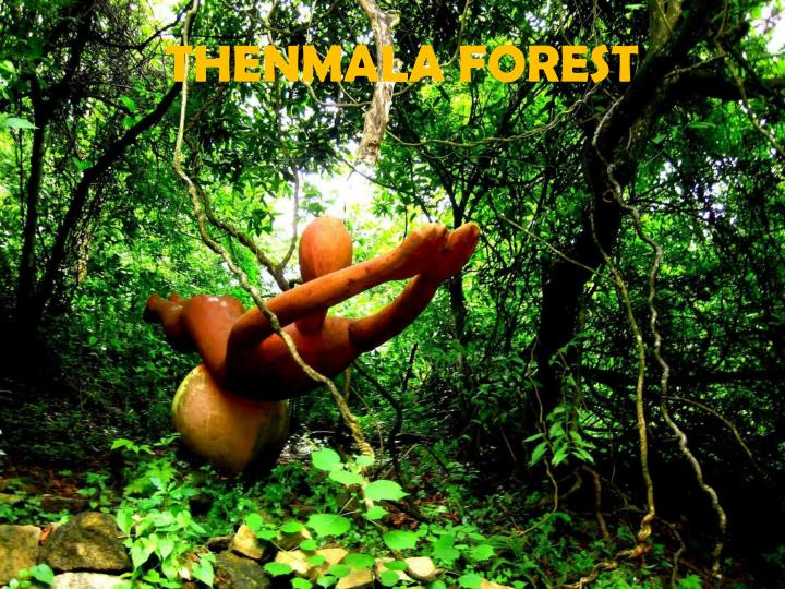 THENMALA FOREST