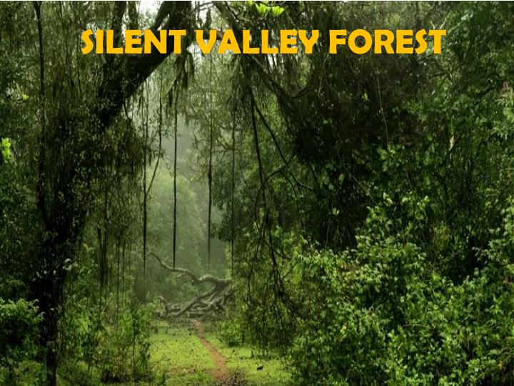 SILENT VALLEY FOREST