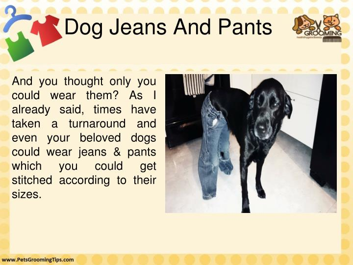 Dog Jeans And Pants