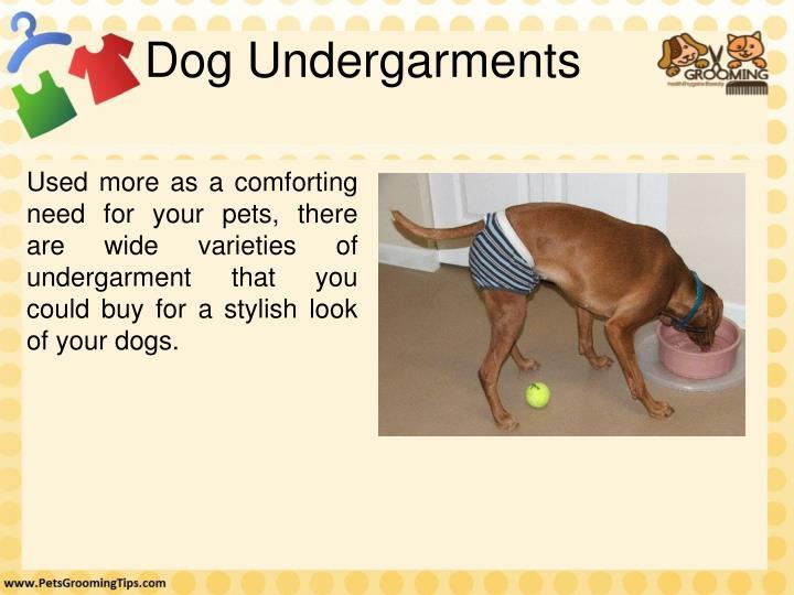 Dog Undergarments