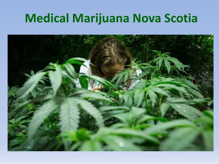 Medical Marijuana Nova Scotia