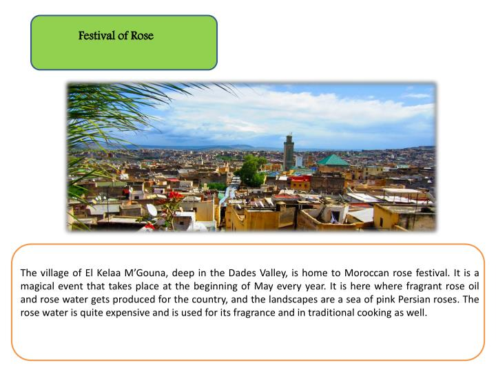 Festival of Rose