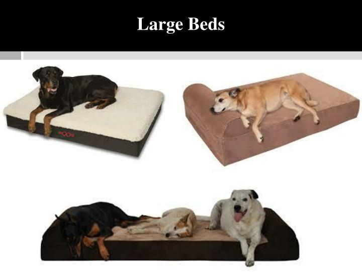 Large Beds