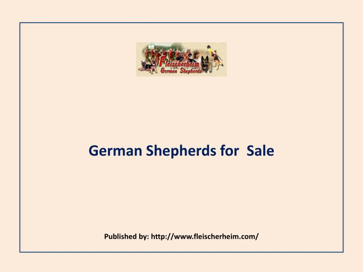 German shepherds for sale published by http www fleischerheim com
