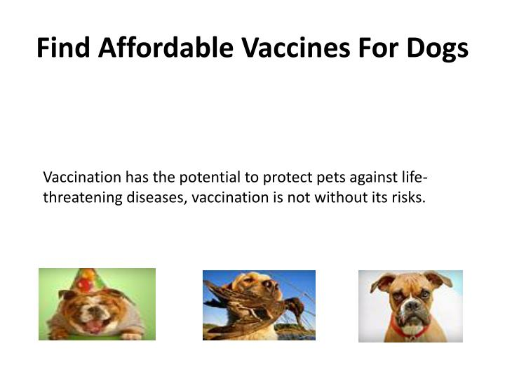 Find affordable vaccines for dogs