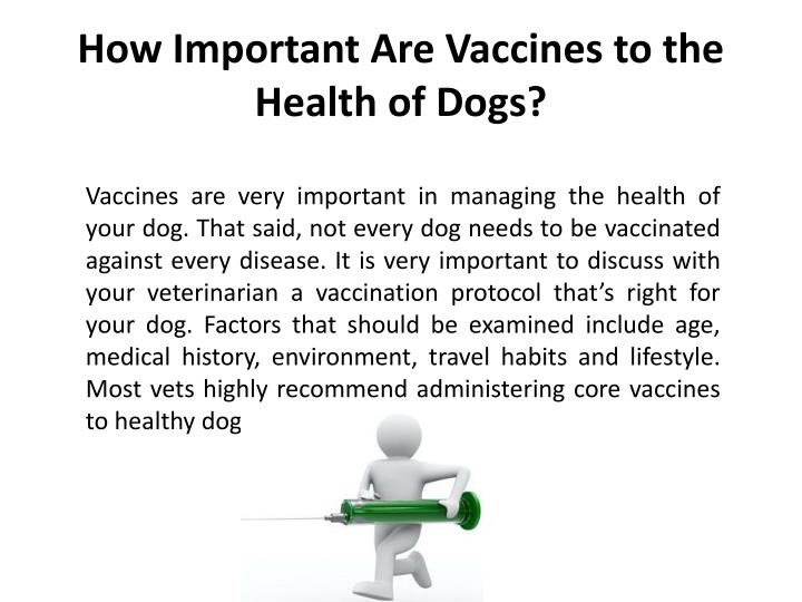 How important are vaccines to the health of dogs