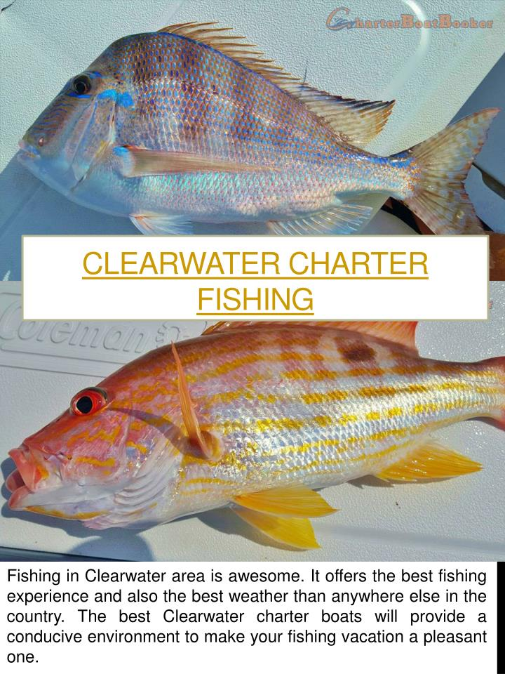 Clearwater Charter Fishing