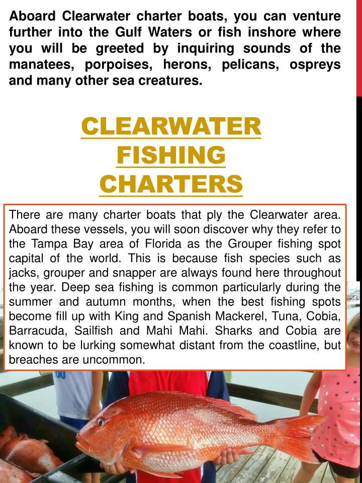 Aboard Clearwater charter boats, you can venture further into the Gulf Waters or fish inshore where you will be greeted by inquiring sounds of the manatees, porpoises, herons, pelicans, ospreys and many other sea creatures