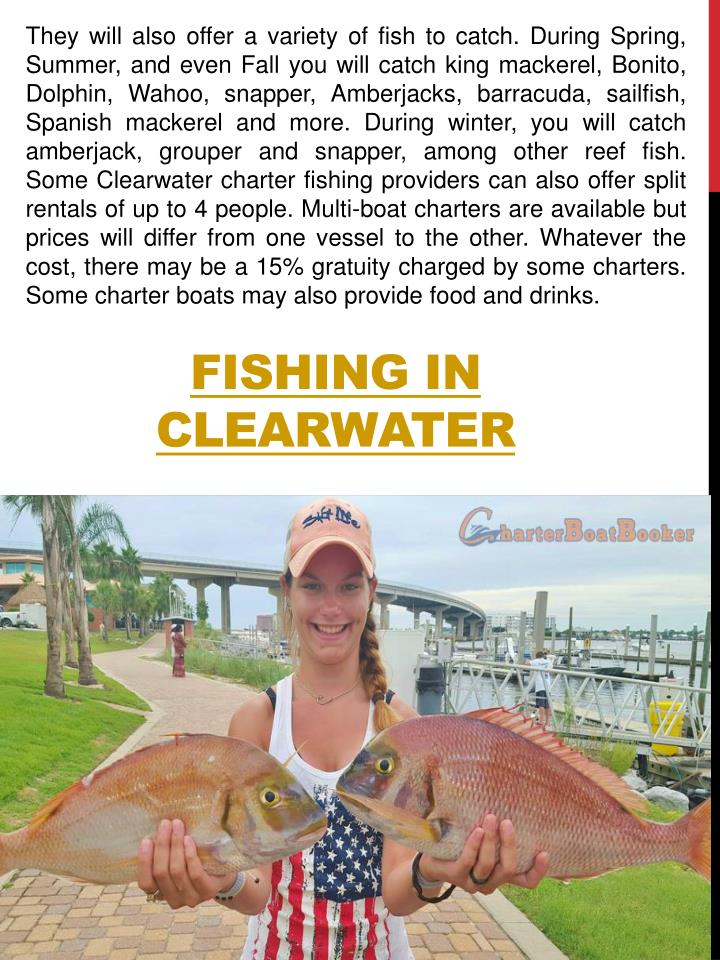 They will also offer a variety of fish to catch. During Spring, Summer, and even Fall you will catch king mackerel, Bonito, Dolphin, Wahoo, snapper, Amberjacks, barracuda, sailfish, Spanish mackerel and more. During winter, you will catch amberjack, grouper and snapper, among other reef fish. Some Clearwater charter fishing providers can also offer split rentals of up to 4 people. Multi-boat charters are available but prices will differ from one vessel to the other. Whatever the cost, there may be a 15% gratuity charged by some charters. Some charter boats may also provide food and drinks.