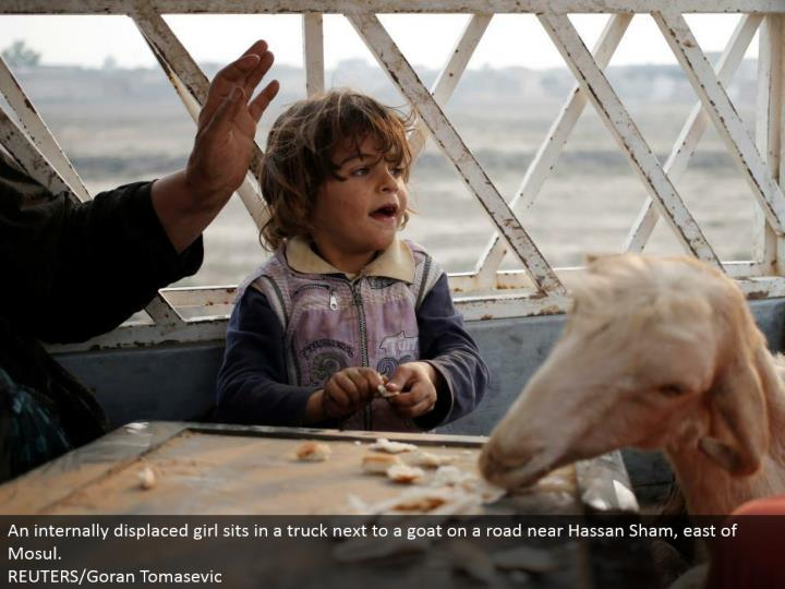 An inside uprooted young lady sits in a truck by a goat on a street close Hassan Sham, east of Mosul. REUTERS/Goran Tomasevic