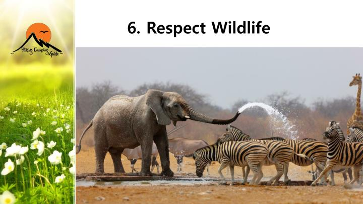 6. Respect Wildlife