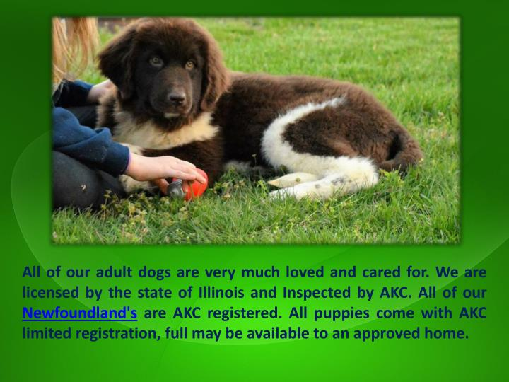 All of our adult dogs are very much loved and cared for. We are licensed by the state of Illinois and Inspected by AKC. All of our