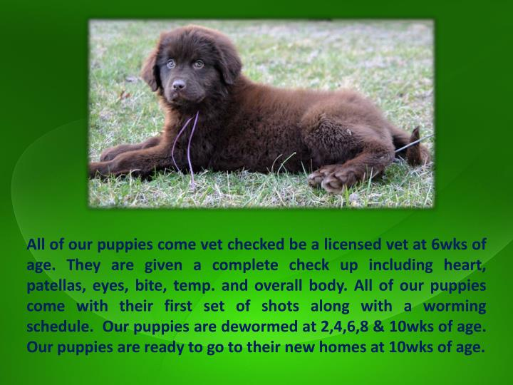 All of our puppies come vet checked be a licensed vet at 6wks of age. They are given a complete check up including heart,