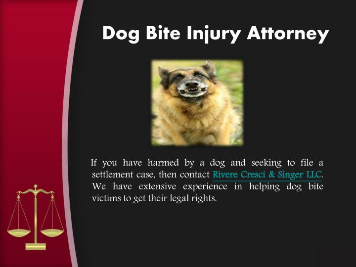 Dog Bite Injury Attorney