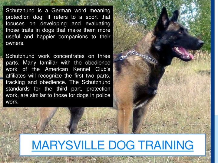 Marysville dog training