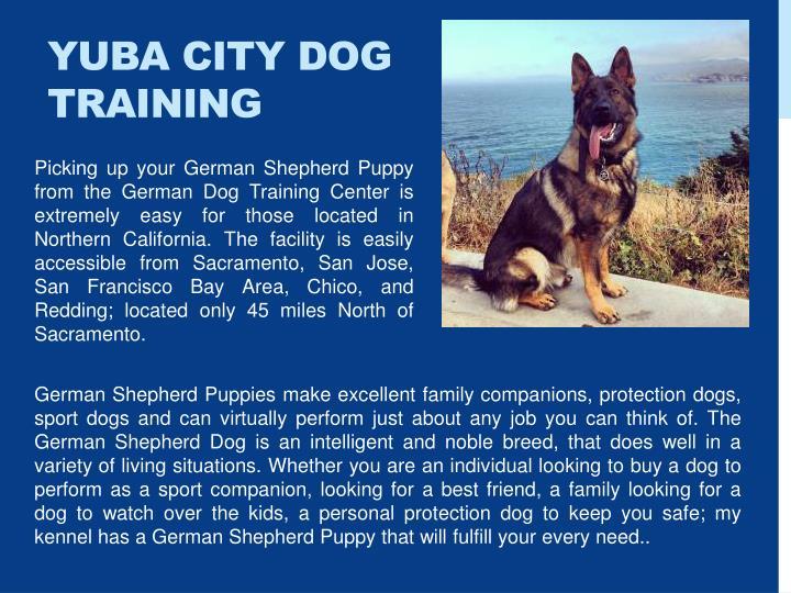 Yuba City Dog Training