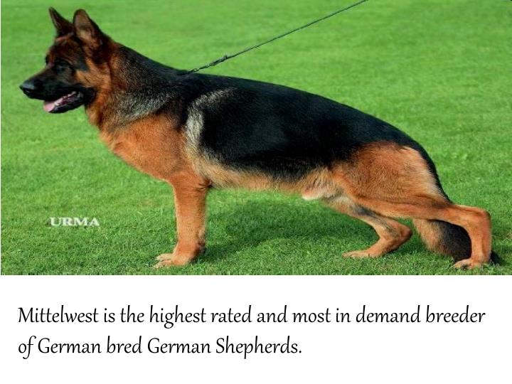 Mittelwestis the highest rated and most in demand breeder