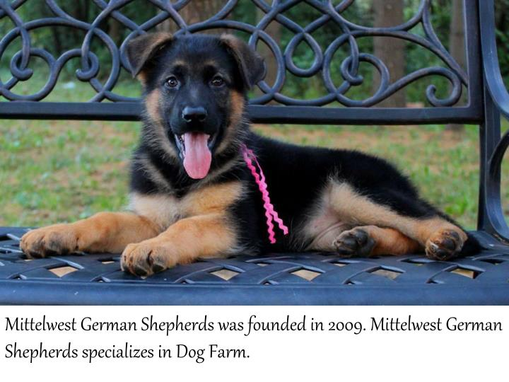 MittelwestGerman Shepherds was founded in 2009. MittelwestGerman