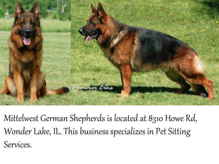 MittelwestGerman Shepherds is located at 8310 Howe Rd,