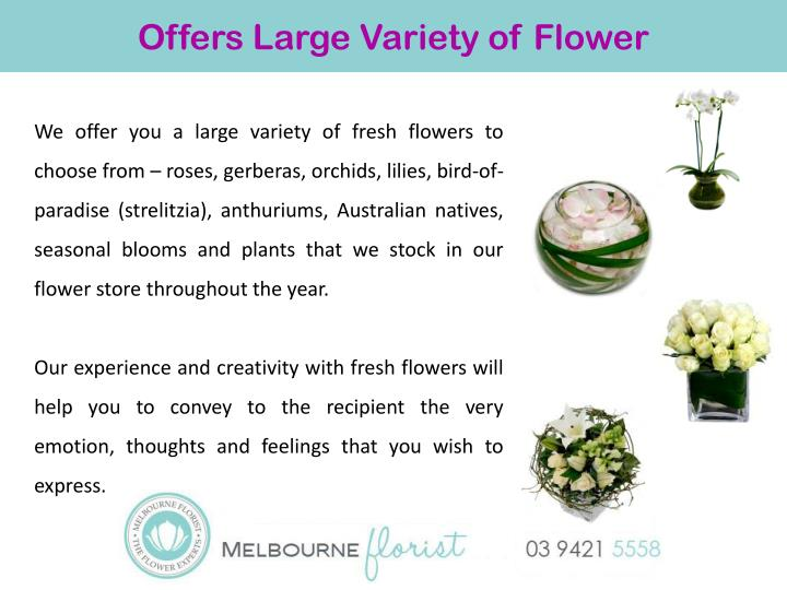 Offers Large Variety of Flower