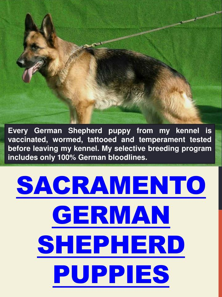 Sacramento german shepherd puppies