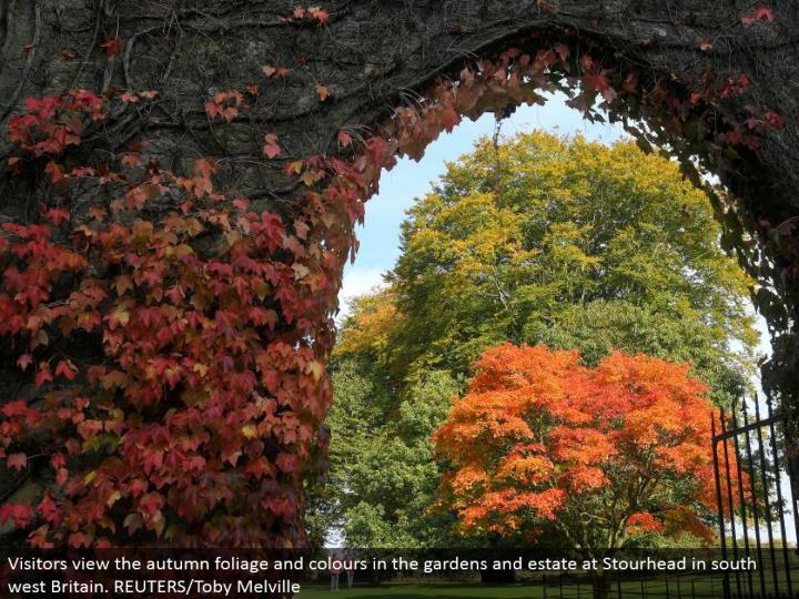 Visitors see the pre-winter foliage and hues in the greenhouses and domain at Stourhead in south west Britain. REUTERS/Toby Melville